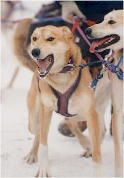 Seekins dogs
