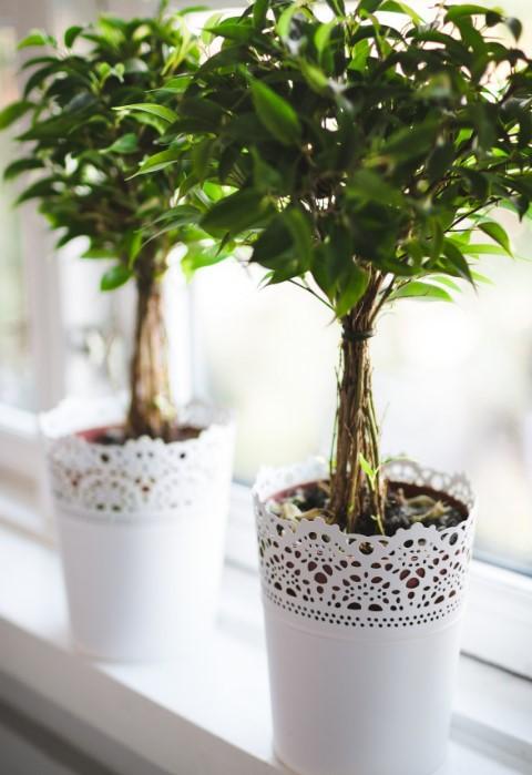 Most houseplants need little,water.