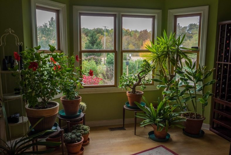Many plants that can work well in an office also make good houseplants